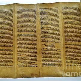 The Torah by Linda Covino
