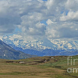 The Trail To Denali by Robert Bales