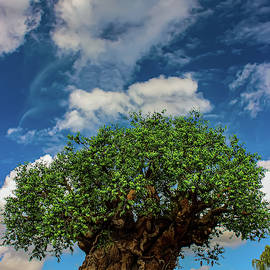 The Tree Of Life by Francois Gendron