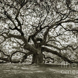 The Twining Branches by Norma Brandsberg
