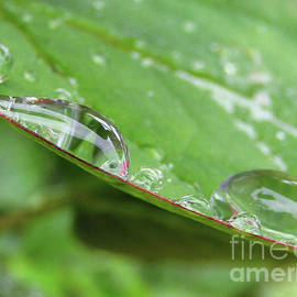 The Two Raindrops by Kim Tran
