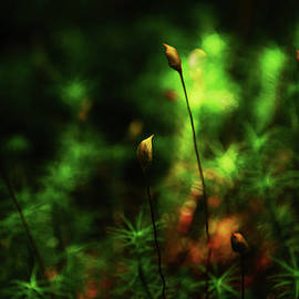 The very tiny bloom of my loved Moss by Imi Koetz