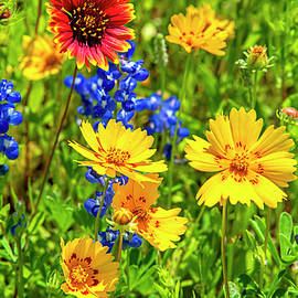 The Vibrant Colors of Spring  by Lynn Bauer
