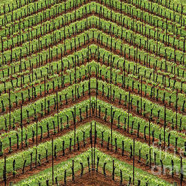 The Vineyard by Mike Nellums