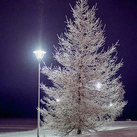 The white Larix at night by Jouko Lehto