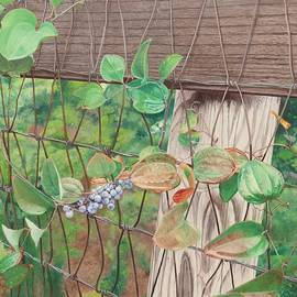 The wild leaves on the fence by Barbara Barber