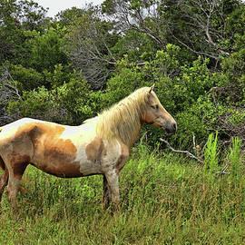The Wildhorses of Assateague Island 3 by Allen Beatty