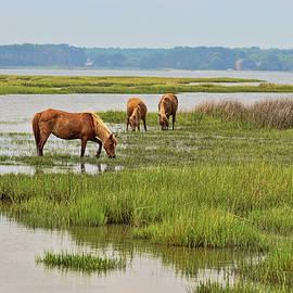 The Wildhorses of Assateague Island 7 by Allen Beatty