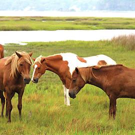 The Wildhorses of Assateague Island by Allen Beatty
