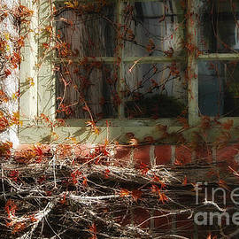 The Window and the Vines by Mike Nellums