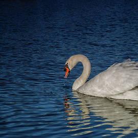 The Wonderful Papa Swan by Linda Howes