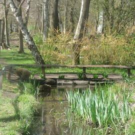 The Woodland Gardens, Bushy Park 1 V by Lynne Iddon