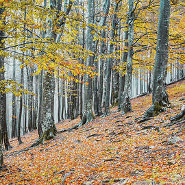 The yellow forest by Cosmin Stan