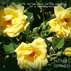 The Yellow Roses of Late Summer by Dora Sofia Caputo