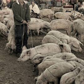 These piggies went to market by Claude LeTien