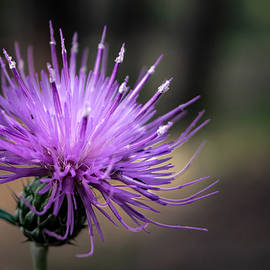 Thistle Brighten Your Day by Bonny Puckett