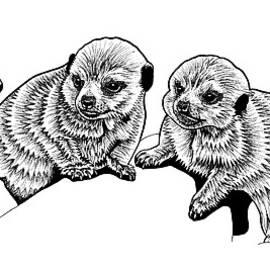 Three baby meerkats ink illustration by Loren Dowding