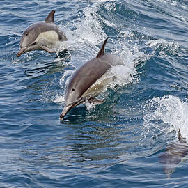 Three Dolphin Stages by Shoal Hollingsworth