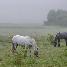 Three horses in a pasture a foggy morning by Torbjorn Swenelius