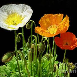 Three Poppies by Trudee Hunter