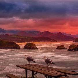 Three Seagulls by David Patterson