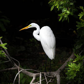 Throne of the Great White Egret by Mark Andrew Thomas