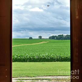 Through The Barn Doors - Square by Linda Brittain