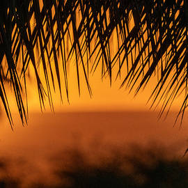 Through the Palms by Maui Todd