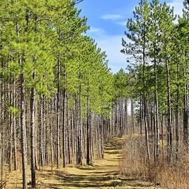 Through the Pine Curtain by Ann Brown
