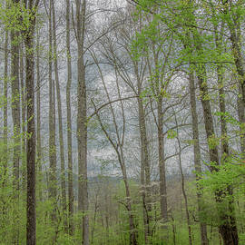 Through the Woods in Springtime by Marcy Wielfaert