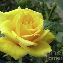 Tickle Me Yellow - Not Pink by Kathryn Jones