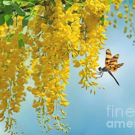 Tiger Dragonfly and Laburnum by Morag Bates
