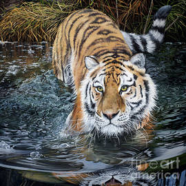 Tiger in the Water by Debbie Clark