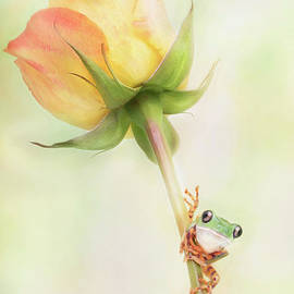 Tiger Leg Monkey Tree Frog and a Rose by Linda D Lester