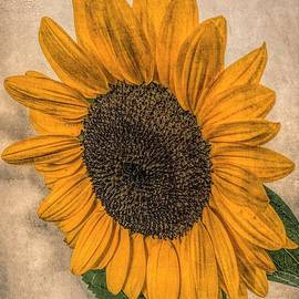 Tilted Sunflower by Luther Fine Art
