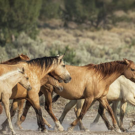 Time To Go - Palomino Butte Herd, No. 1 by Belinda Greb