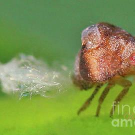 Tiny Beauty by Dorothy Pugh