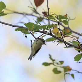 Tiny bird on a branch by Jeff Swan