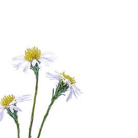 Tiny Camomile Flowers by Sandi Kroll