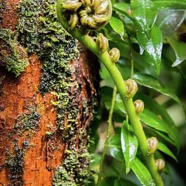 Tiny Rainforest Secrets by Karen Wiles