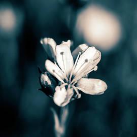 Tiny white flower variation  by Cara Vivian