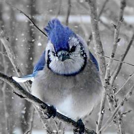 Tired of the Snow by Lyuba Filatova