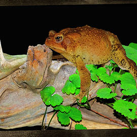 Toad On Driftwood by Constance Lowery