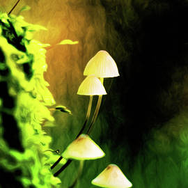 Toadstools in the Moss by Susan Maxwell Schmidt