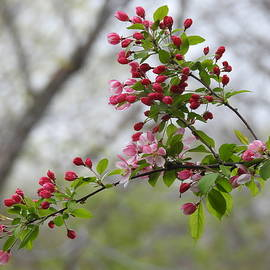 Today's Buds Tomorrow's Blossoms by Barbara Ebeling