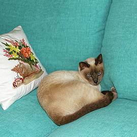 Tonkinese Cat on Sofa by Sally Weigand