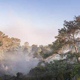 Torrey Pines Foggy Tree Panorama by William Dunigan