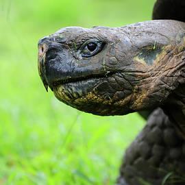 Tortoise Head Shot by Jenna Wilson