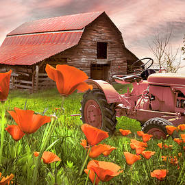 Tractor in Farmhouse Poppies by Debra and Dave Vanderlaan