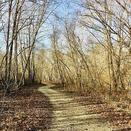 Trail in Early Winter by Debra and Dave Vanderlaan